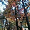 佛通寺(広島県三原市)へ紅葉狩りに行ってきました!
