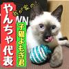 我が家のヤンチャ代表!子猫よもぎのボール遊び!【ダイソー猫のおもちゃ】