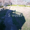 ブログを始めて5週間|PV数と所感まとめ