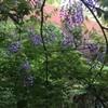 自然の色を満喫@熊本県