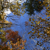 🍂西沢渓谷の紅葉🍁