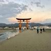 広島県 宮島 干潮60cm 日出前 厳島神社 大鳥居、干満の差の激しい瀬戸内海 予想以上に引いた海