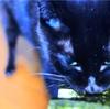猫と、猫飼い主様の楽しみも。