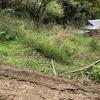 筍の収穫場所の整備