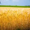 【アグリカルチャーVol.1】農業に興味を持ったらまずはこれをやってみよう!