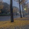 大阪城にまで来て城を撮らず。秀吉も助走をつけて殴るレベルの選択肢