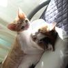 猫と娘と猫と【すきまの話】
