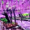 埼玉県のここにしかない魅力#20春日部市