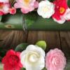 【京都 霊鑑寺】通常非公開。春の特別公開で迎えてくれる椿の数々。