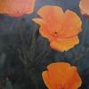 4月17日誕生日の花と花言葉歌句