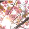 山口でうまれた歌。4月はジェリー藤尾さんが歌う「この国よ」を再び。