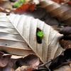 落ち葉の下から こんにちは!