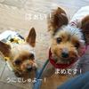 松本市内の大好きなジェラート屋さん【Picco】