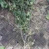 2011/10/23 今年も奇麗に咲いてくれたサルスベリ。もう結実