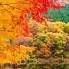 【今週のはてな】物思いにふける秋
