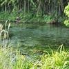 境川・清住緑地の公園池(静岡県三島)