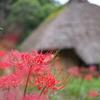 町田薬師池公園の彼岸花+鳥。