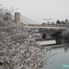 桜 ≪#2-1≫名古屋 ―「荒子川公園」の桜と「あおなみ線」 ―