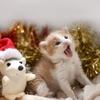【フリー音楽】オルゴール/We wish you a merry Christmas(おめでとうクリスマス)