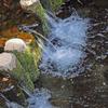 武蔵野散策…真姿の池から武蔵国分寺