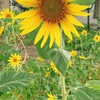「わたし」の花を 咲かせる