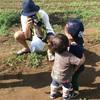 ブルーベリー収穫祭