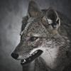 人狼ゲーム~牢獄の悪夢~デラックスパッケージ テストプレイレビュー
