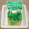 空芯菜の余り種で「スプラウト(もやし)」作りに挑戦。茹でた後の変色に気を付けましょう