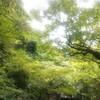 台風の去った午後、篠栗涼しかったです。