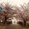 平成最後の花見と20歳の女の子にフラれたハナシ