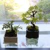 「アップデートする暮らし」第17回:植物を枯らさなくなった