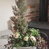 メインの花にこだわりたいならネット購入がおすすめ?ペチュニア・コニファを用いたギャザリングのアイデア