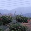 初冬の景色