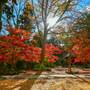 【益子】益子の名刹にて紅葉を愛で撮る。 益子町円通寺 November 2018