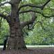 新宿御苑4万本の木々から「太い木トップ10」