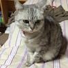 猫好きなあなたへ。ウチの猫の写真で癒されて下さい。