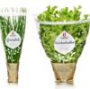 思わず買いたくなる、おいしそうな野菜のパッケージデザイン