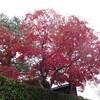 嵐山へ紅葉を見に行く(京都)…過去20161127