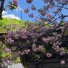 春の鎌倉 浄智寺