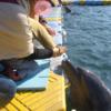香川県さぬき市ドルフィンセンター・ドルフィンセンター口コミは?イルカに触れるの?おススメだった