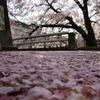 落ちてくる桜の花びら全部回収して 改めて敷き詰めたら 神戸全域を埋め尽くせる量がある神戸全面ピンク説