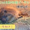 【レポ#19.5】よこはま動物園ズーラシア現地レポート(2021/01/07)見どころまとめ