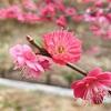 太閤さん子授けの寺「中山寺」で観梅。豪華絢爛な寺院と華やかな梅園で春満喫!