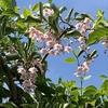 農林総合研究センターの初夏の花