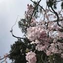 yumemonogatari