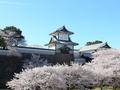金沢の桜の名所・兼六園と金沢城のライブカメラが配信中:12時間さかのぼって観賞可能