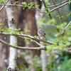 しょうぶ園で野鳥観察(撮影 SONY RX10m4)