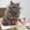 病院嫌いの猫に!【Fish Save Cats】尿だけ持ち込んで病気の早期発見を!
