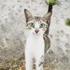 モンテネグロは猫に優しい
