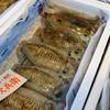2021年3月22日 小浜漁港 お魚情報